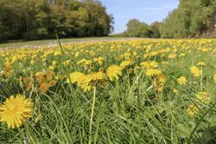 Flower, Prairie, Yellow, Ecosystem royalty free stock images
