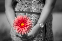 Flower and pregnancy Stock Photography