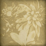 Flower Print Background Royalty Free Stock Images