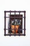 Flower-prisoner Royalty Free Stock Images