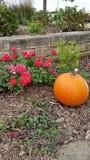 Flower pumpkin Royalty Free Stock Image