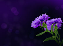 Flower purple Royalty Free Stock Images