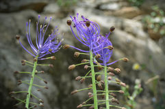 Flower. Purple flower stock photography