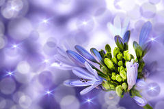 Flower on a purple background Stock Image