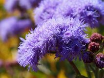 Flower. Purple flower on background blur stock images