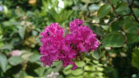 Flower. Purple color nature tree Royalty Free Stock Photos