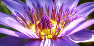 Flower, Purple, Flora, Close Up Royalty Free Stock Photography