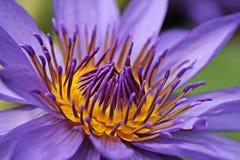 Flower, Purple, Flora, Petal Royalty Free Stock Photo