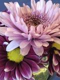 Flower, Purple, Flora, Violet