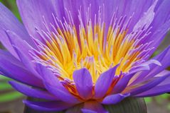 Flower, Purple, Flora, Wildflower Stock Photos
