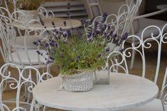 Flower, Purple, Flower Arranging, Lavender royalty free stock image