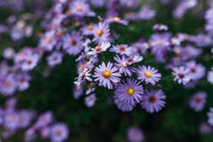 Flower purple. /The best photo for you stock photo