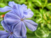 Flower Stock Photos