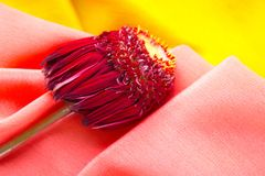 Flower with purple leaves lying on the pink and yellow fabric royalty free stock photos