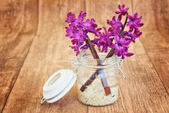 Flower, Purple, Lilac, Violet Royalty Free Stock Image