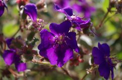 Flower, Purple, Plant, Flowering Plant royalty free stock photography