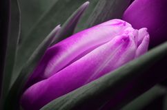 Flower, Purple, Violet, Close Up stock photos