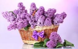 Flower, Purple, Violet, Flowerpot Stock Photos