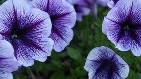 Flower, Purple, Violet, Plant Royalty Free Stock Photo