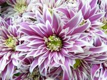 Flower, Purple, Violet, Plant Royalty Free Stock Image