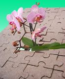 The flower and puzzles Stock Photos