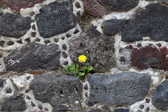Flower on the Pyramids of Teotihuacan, Mexico. Stock Images