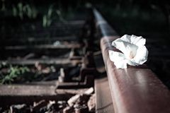 Flower on railroad track Stock Photo