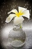 Flower in rain. Flower in glass vase in rain Royalty Free Stock Images