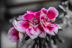 The flower Royalty Free Stock Images