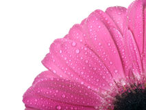 Flower with rain drops Stock Image