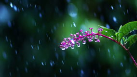 Flower in the Rain. Flowers in the rain. Blurring background. Daylight stock footage