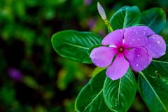Flower after rain stock image