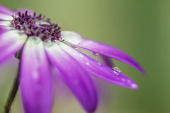 Flower rain Royalty Free Stock Images