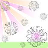 flower rain s Стоковые Изображения