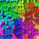 Flower rainbow. This image can be used to create different images, illustration Stock Photography