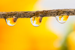 Flower and Raindrops Royalty Free Stock Photography