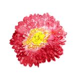 Flower of red aster Stock Image