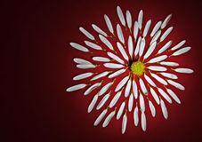 Flower on a red background. A broken flower on red background Stock Photo