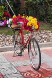 Flower. On the red bicycle Stock Photography