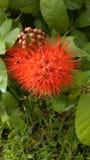 Flower. Red Bush willow in the garden Stock Photo