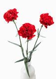 Flower. Red Carnations Bouquet Isolated On White Background Royalty Free Stock Images