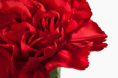 Flower. Red carnations bouquet macro Royalty Free Stock Photography