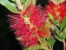 Flower, Red Flower, Brightness Royalty Free Stock Photos