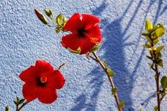 Flower, Red, Flowering Plant, Plant stock photo