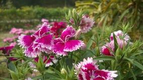 Flower2 Royalty Free Stock Photos