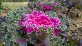 Flower3 Stock Image