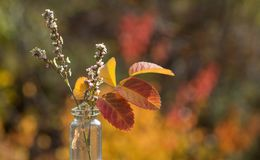 Flower and red leaves in bottle. With blur bokeh light background stock photo