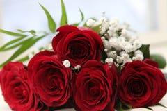 Flower, Red, Petal, Bloom, Garden Stock Photos