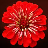 Flower, Red, Petal, Close Up stock photo