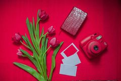 Flower, Red, Pink, Flowering Plant stock images